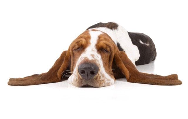 Foto: Ein schlafender Hund